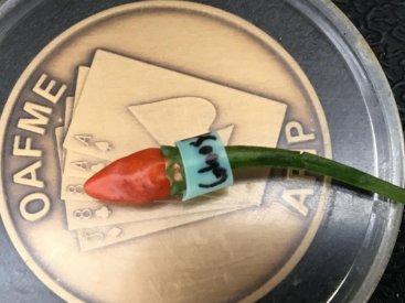 Capsicum frutescens 'Cabai Burung Ungu' x C. 'Ghost'.jpeg