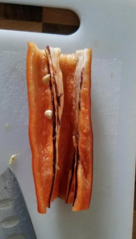 TasmanianBlack2.jpg