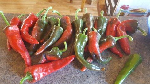 ChimayoNambe Pueblo 8-31-21.jpg