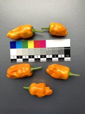 20210925-orange-fish-3.jpg